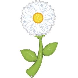 "5"" Fresh Pick White Daisy (01Ct)"